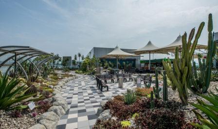 jardín de cactus del aeropuerto de changi