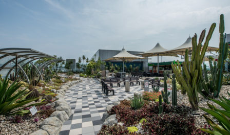 changi airport cactus garden